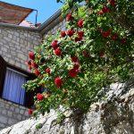 DSC 0608 150x150 - Old Town Rab Pjaceta Accommodation